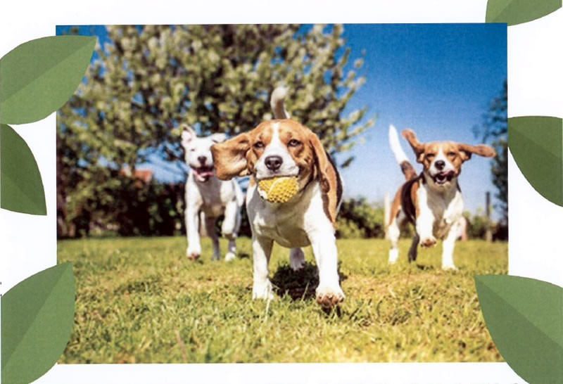 """Nasce un nuovo progetto per migliorare la convivenza tra persone e amici a quattro zampe """"Dog Park"""""""