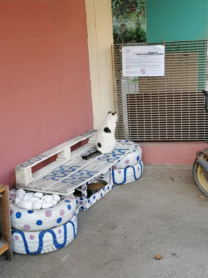 Continua l'impegno dei Volontari per la riqualificazione delle Colonie Feline